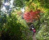 六甲山最高峰と東おたふく山を歩こう