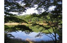 再度公園の裏道を歩く①修法ヶ原池
