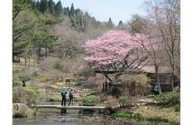 春の花めぐりイメージ