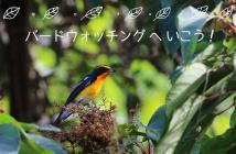 鳥に秋を感じよう! 探鳥会