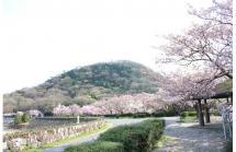 03北山ダムと桜
