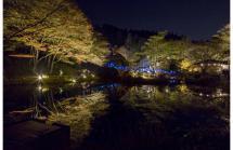 夜の紅葉散策