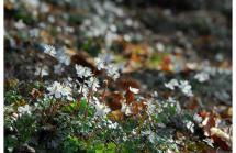 六甲高山植物園 冬季特別開園