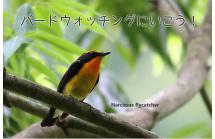布引で繁殖する野鳥をそっと見よう 探鳥会