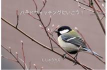 春を探して 探鳥会2020.01