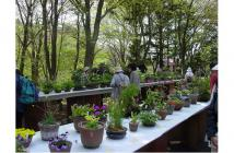 初夏の高山植物展2020.03