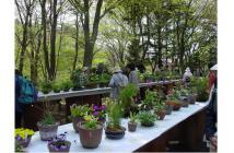 初夏の高山植物展2021.2